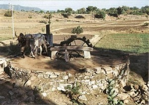 irrigation by well Soon Sakesar Valley culture
